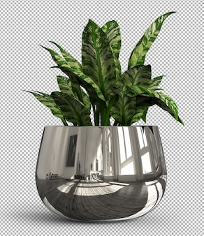 Render der isolierten pflanze. isometrische vorderansicht auf transparent