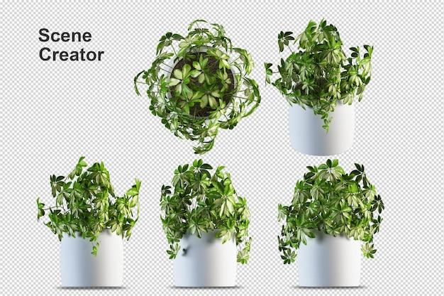 Render der transparenten wand der isometrischen vorderansicht der isolierten pflanze