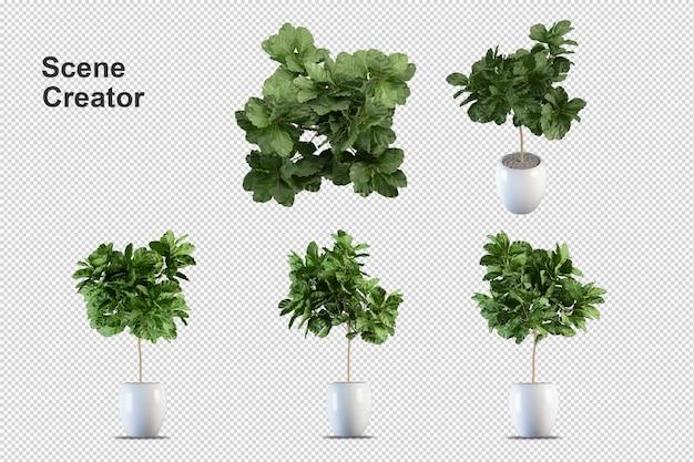 Render von isolierten pflanzen 3d