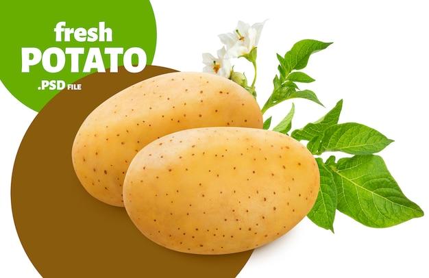 Rohe kartoffel mit grünem blattfahne