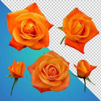 Rosen blume