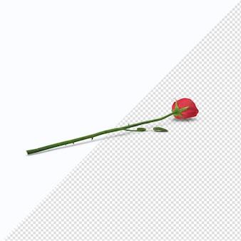 Rote rose auf dem boden isoliert