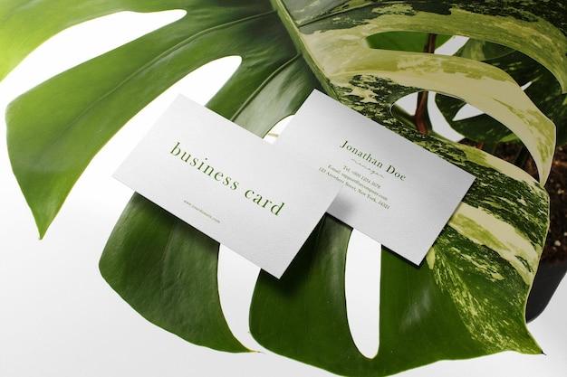 Sauberes minimales visitenkartenmodell auf monstera variegata