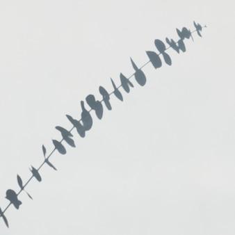 Schatten des eukalyptus an einer weißen wand