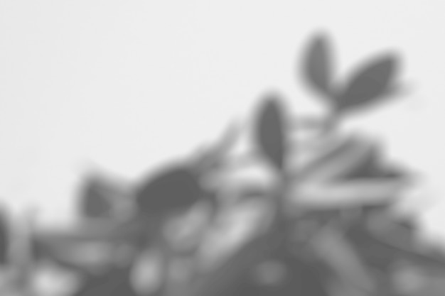 Schatten von blättern auf einer weißen wand