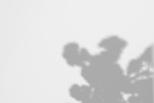 Schatten von blättern und von blumen auf einer weißen wand