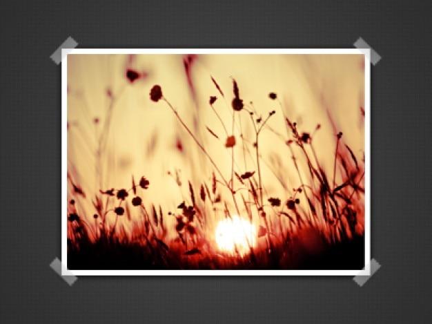 Schönen floralen präsentation psd bilder