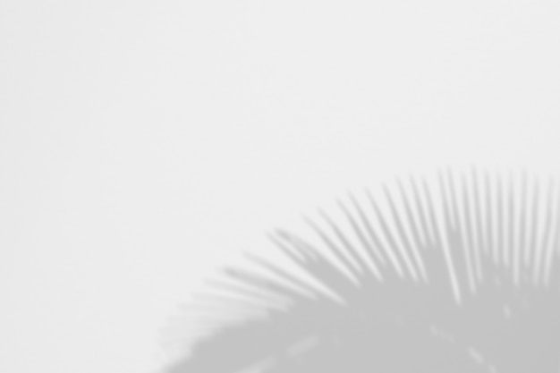 Sommer von schattenpalmblättern auf einer weißen wand
