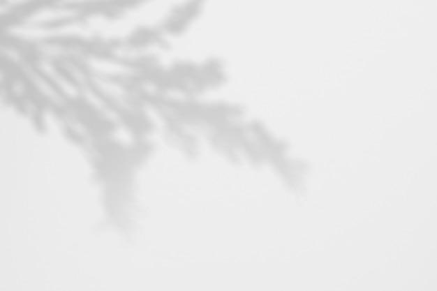 Sommerhintergrund der tropischen blume der schatten auf einer weißen wand