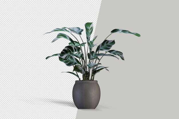 Topfpflanzen in 3d-rendering isoliert