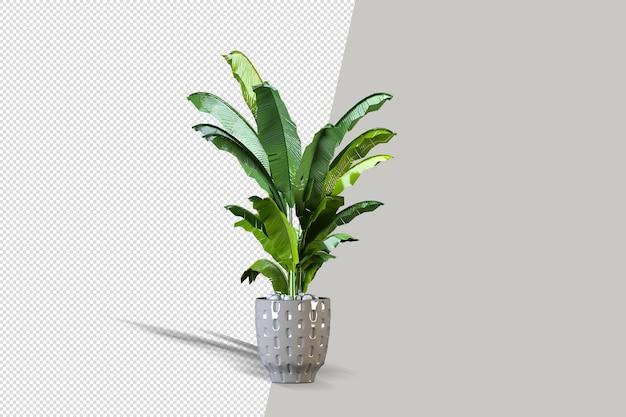Topfpflanzenblumen in der 3d-darstellung isoliert