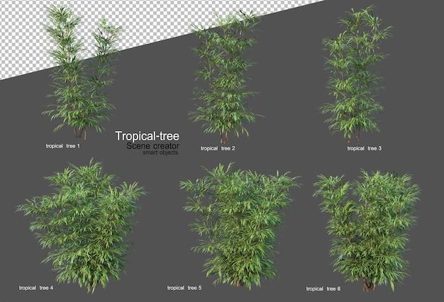 Tropische bäume und pflanzen in 3d-rendering