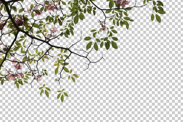 Tropische baumblumenblätter und zweigvordergrund lokalisiert
