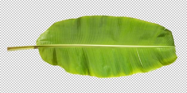 Tropisches blatt des bananenblattes isoliert