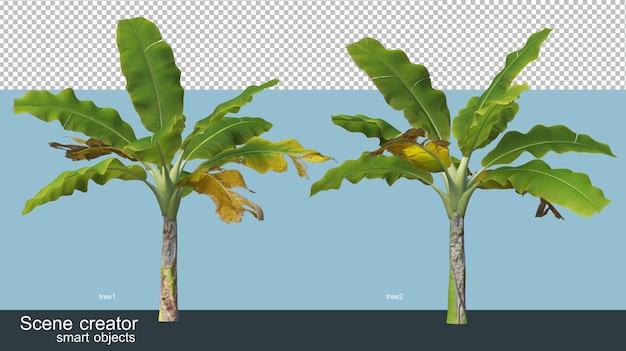 Verschiedene arten von 3d-rendering von bananenbäumen