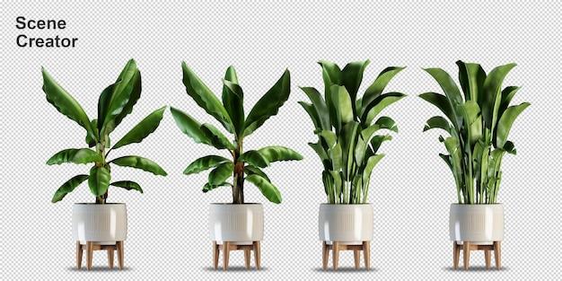 Verschiedene arten von bananenbaum-3d-rendering