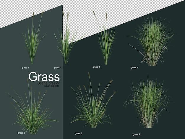 Verschiedene arten von gras 3d-rendering