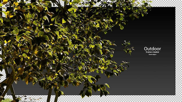 Vielfalt baum zweig beschneidungspfad bäume isoliert 3d-baum-rendering