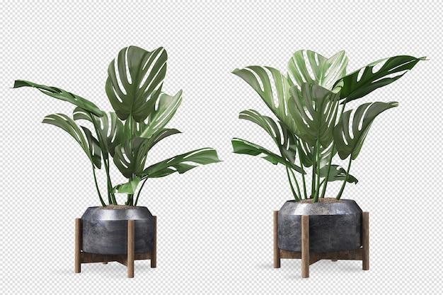Vorderansicht der monstera-pflanze im topf im 3d-rendering