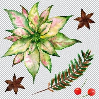 Weihnachtsblumenbündel mit weihnachtsstern und ale und anis und roten beeren
