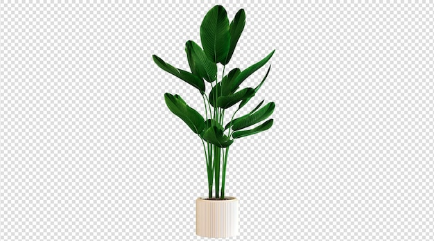 Weiße topf- und breitblattpflanzen