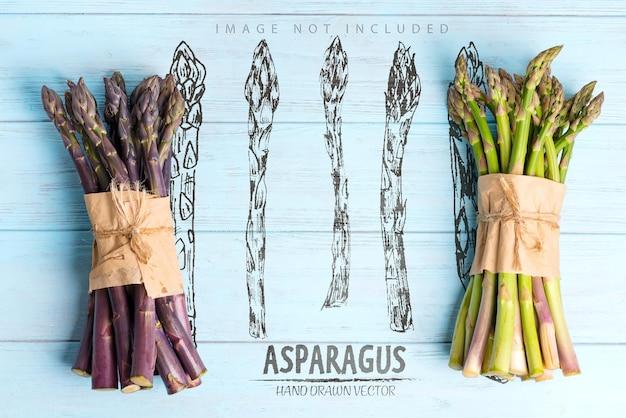 Zwei bündel von selbst gewachsenen rohen organischen lila und grünen spargelstangen zum kochen gesunder vegetarischer diätnahrungsmittelkopierraum veganes konzept