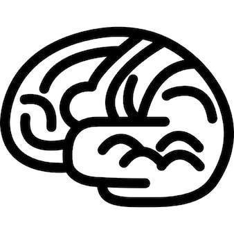 Cervello organo del corpo contorno