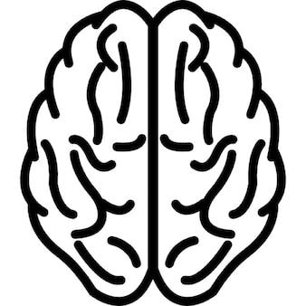 Cervello vista superiore contorno