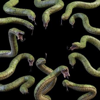 13 grands serpents à dents. rendu 3d