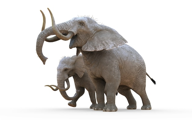 3d illustration éléphant isolat sur fond blanc avec un tracé de détourage