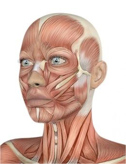 3d rendent d'un visage féminin avec une carte détaillée de muscle