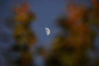 5 h lune à travers les feuilles d'un arbre