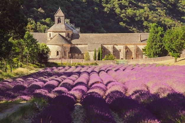 Abbaye de sénanque et champ de fleurs de lavande en fleurs