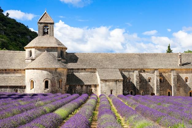 Abbaye de sénanque et fleurs de lavande. france.