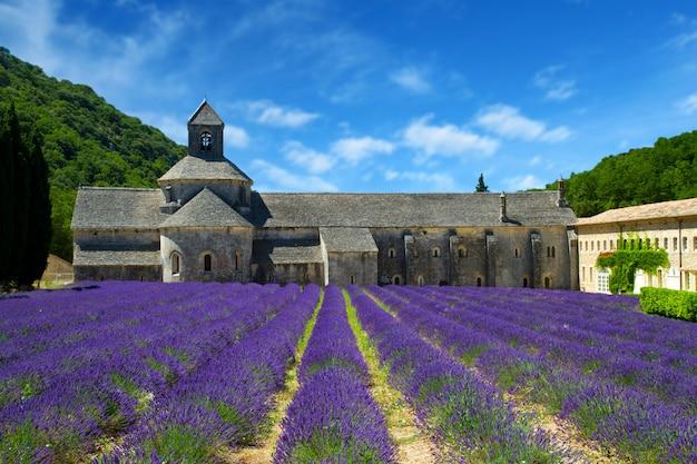 Abbaye de sénanque et rangées fleuries de fleurs de lavande. gordes, lu