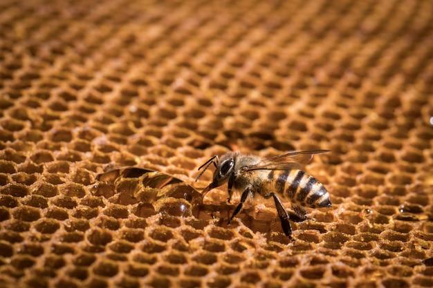 L'abeille est sur le nid d'abeille.