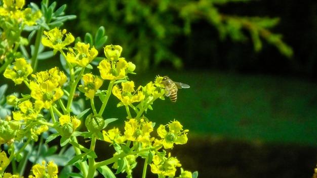Abeille fleur célibataire abeille nature feuilles jaunes