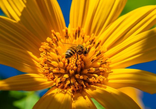 Abeille et fleur dans le jardin