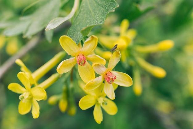 Abeille à miel sur une fleur actuelle dorée