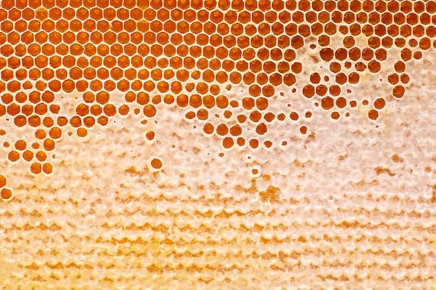 Abeille miel frais en rayons. fond et texture. aliments naturels vitaminés. produit de travail d'abeille