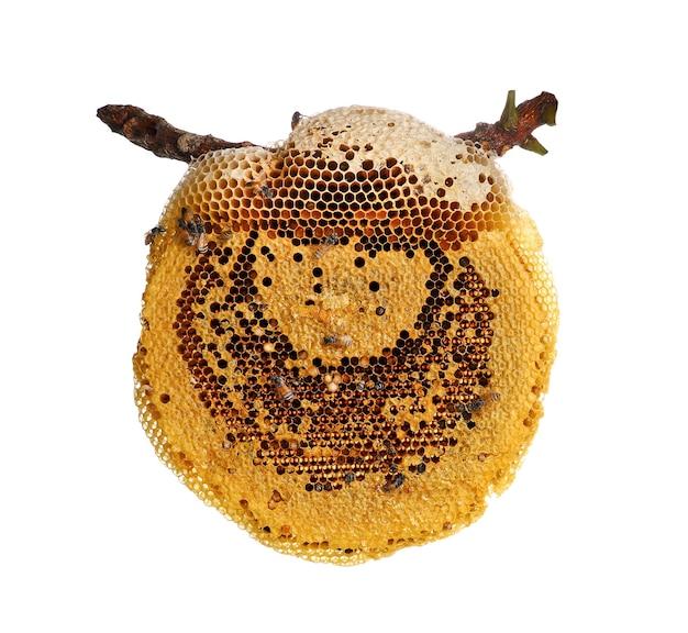 Abeille sur nid d'abeille isolé sur fond blanc