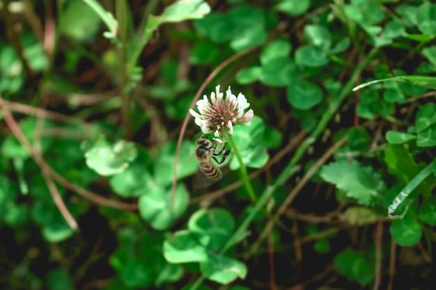 Abeille pollinisation animale macro jaune