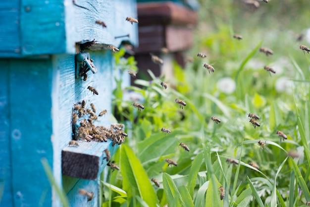 Les abeilles apportent le nectar à la ruche