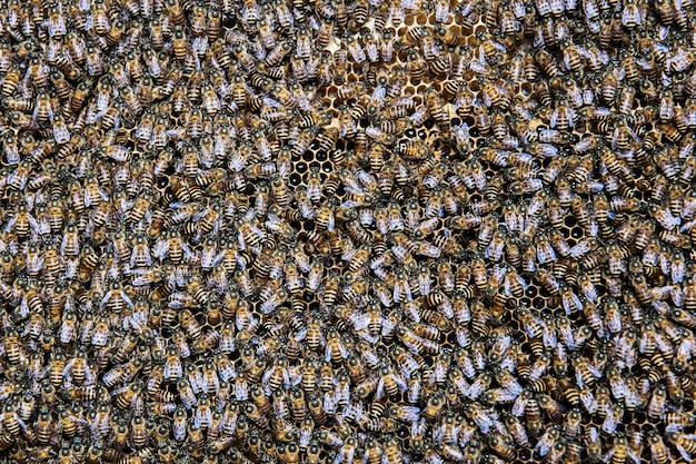 Abeilles au nid d'abeille