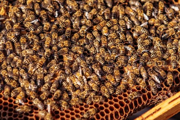 Abeilles sur honeycomb.