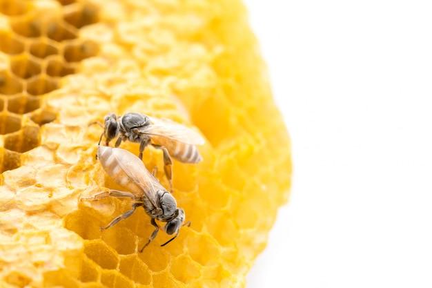 Abeilles macro sur shoot studio en nid d'abeille et isolé sur blanc