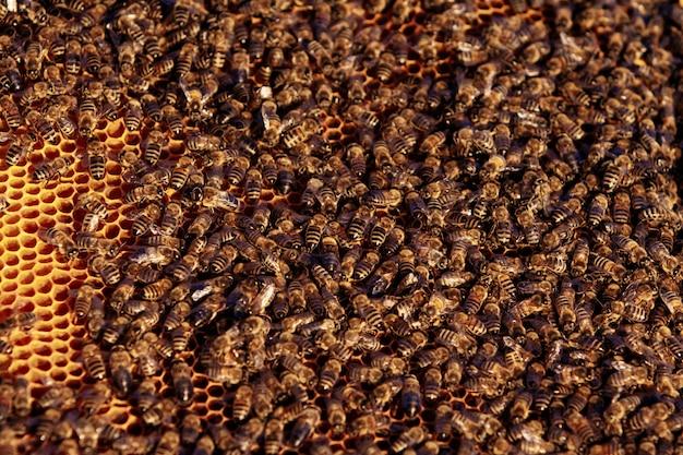 Abeilles sur nid d'abeille dans le rucher