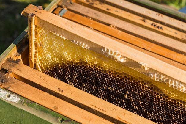 Abeilles sur nid d'abeille