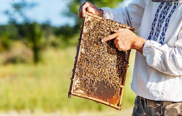Abeilles sur nids d'abeilles.