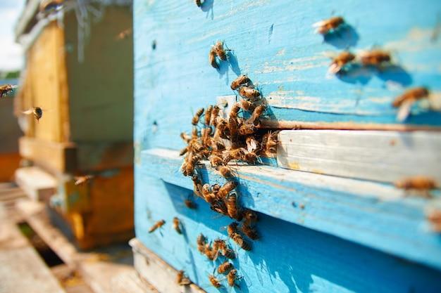 Abeilles sur une ruche en bois